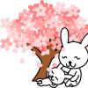 桜の状態と予定と天気が花見の予定になかなか折り合わない件について