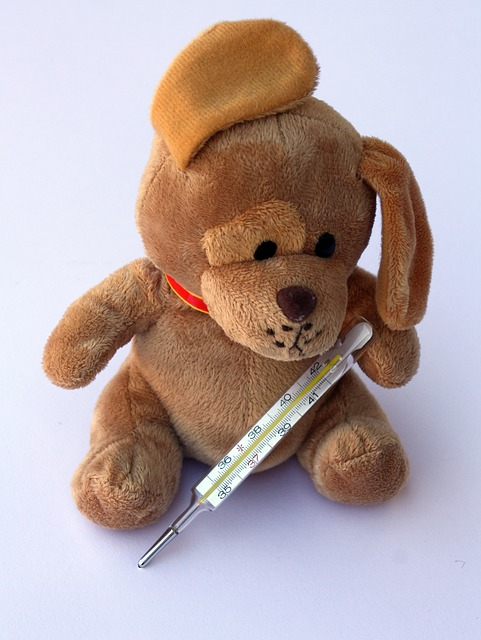 teddy-242868_640